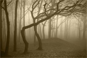 Supernatural Forest