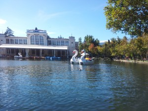 Swan boats are great!